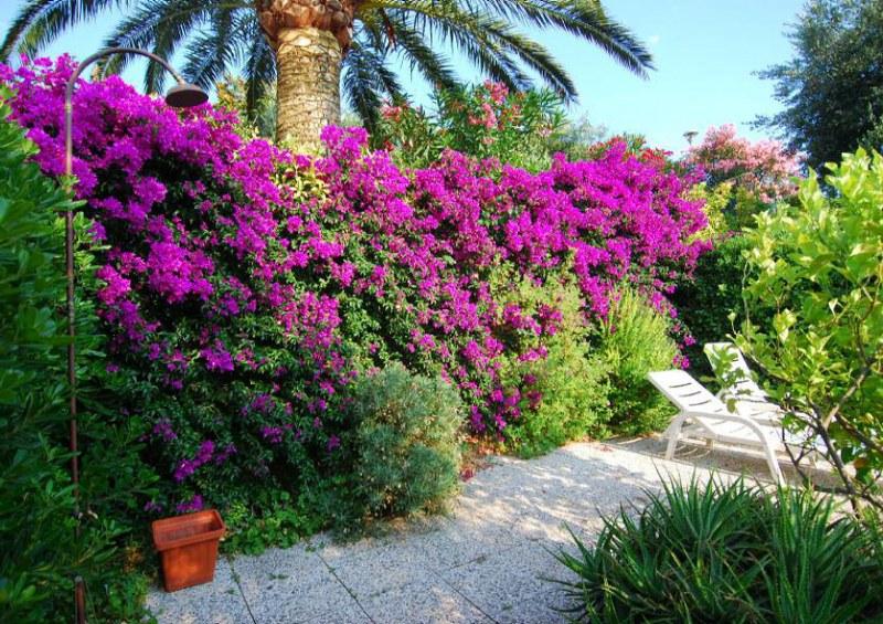 Monolocale con giardino e terrazza Case e Arte – Agenzia Immobiliare ad Alassio